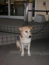 Dog01